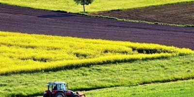 Оренда сільськогосподарських земель: зберігається дворазовий розрив між платою за державні та приватні землі