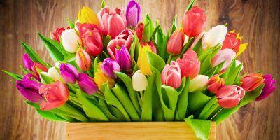 Вітання в. о. Голови Держгеокадастру Олега Цвяха зі святом 8 Березня